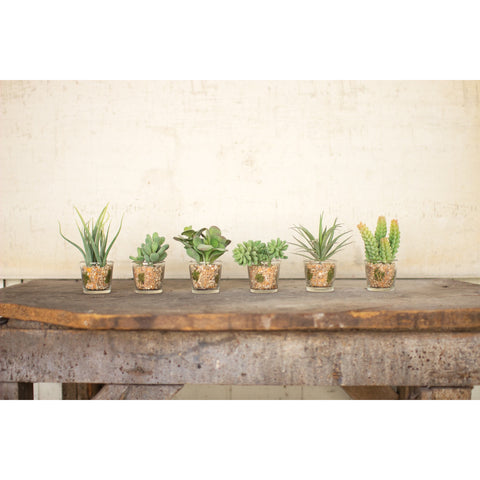 Set of 6 Artificial Succulents in Glass Container