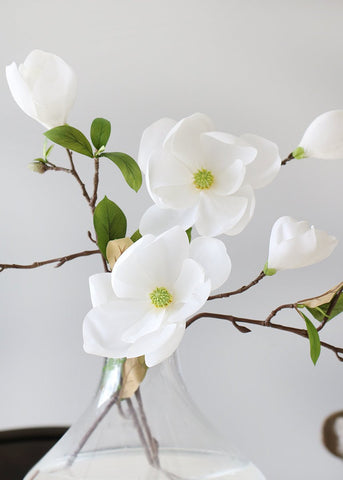 White Magnolia Branch