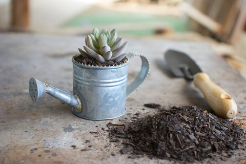 Miniature Zinc Watering Can