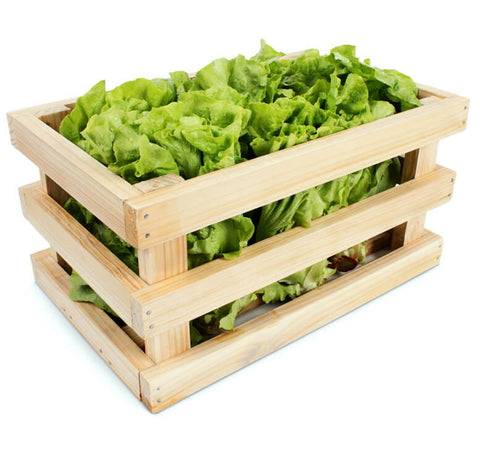 Romaine Lettuce (Crate of 24 heads)