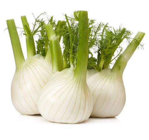 Fennel (3 bulbs)
