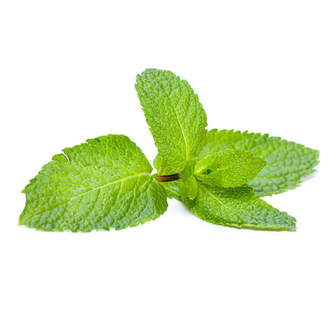 Fresh Peppermint