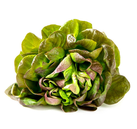 Red Oakleaf Lettuce (紅橡生菜)