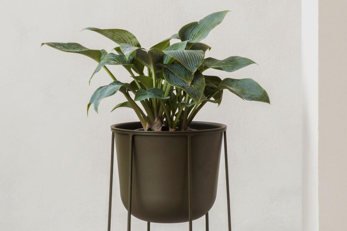 Capricho, Wire Planter in Olive Green with plant, MENU