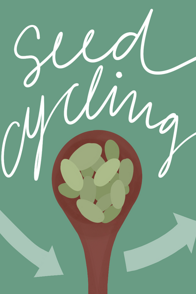 Seed Cycling Illustration