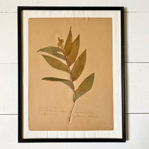 FRAMED PRESSED BOTANICAL
