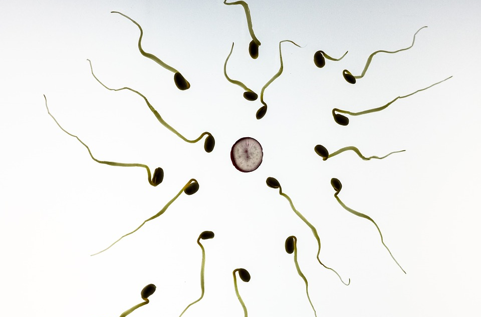 What You Should Do to Improve Sperm Count, Quality, and Motility