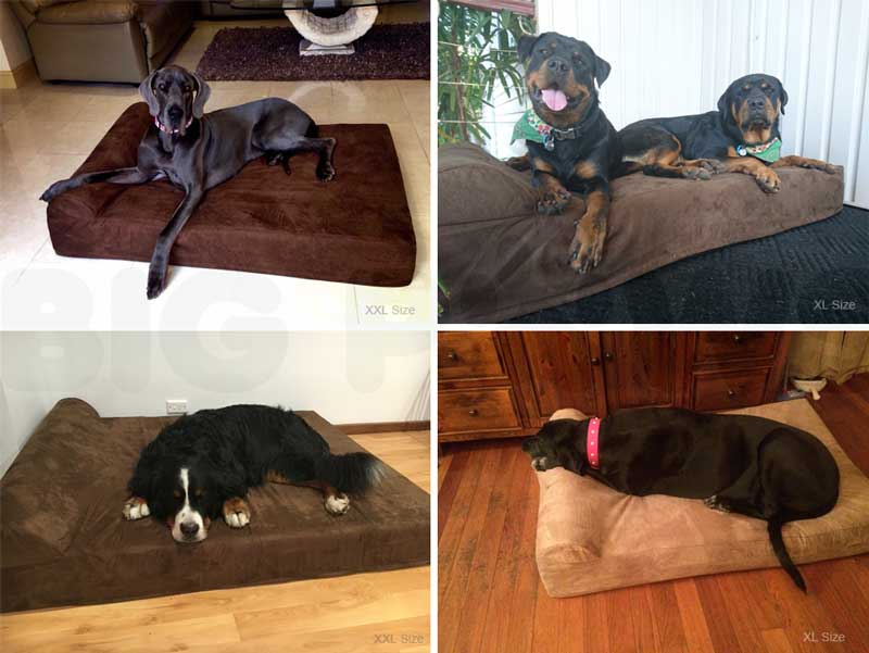 Big Paws Dog Beds Customer Photos