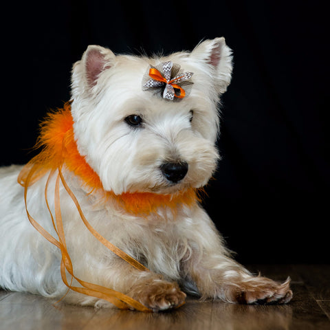 Cute Dog With Bardel Bows Halloween Grooming Bow