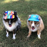 Cool Dog - Blue Cap - A Real Fashion Statement