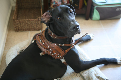 Custom Heavy Duty Luxury Leather Dog Collar & Harness with Handle - Padded & Lined with Black Sheep Skin, Dog Collars - Behind The Wire Shop