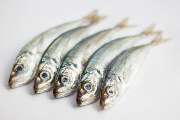 Sardines may be small, but they are mighty superfood