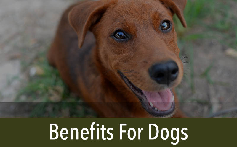 Benefit For Dogs and Cats
