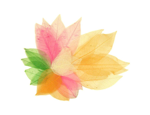 Skeleton Leaves Pack of 20