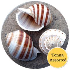 Tonna Assorted