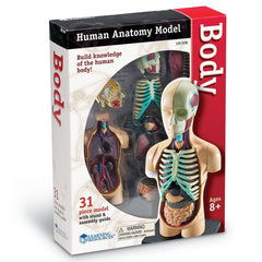 Anatomy Model - Human Body