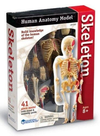 Anatomy Model - Skeleton