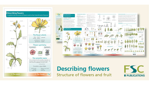 Describing Flowers Field Guide