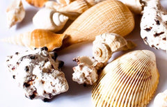 Deluxe Mixed Shells