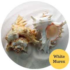 Murex White Medium