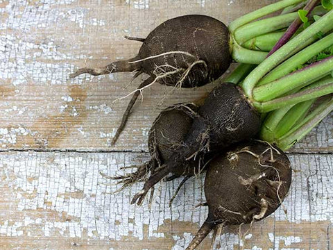 Black Spanish Radishes