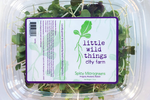 Spicy Mix Microgreen Salad