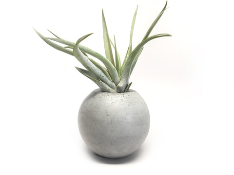 "3"" Concrete Sphere Planter - Air Plant Holder - Geometric Planter"
