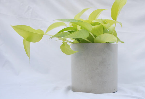 "6"" Concrete Cylinder Planter - Storage - Utensil Holder"