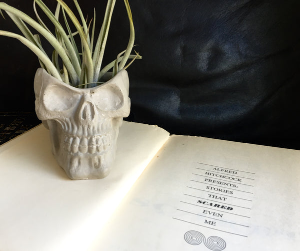 Concrete Skull Planter - Creepy Decor