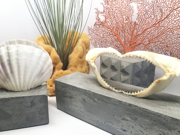 sealife planter Anson Design CO