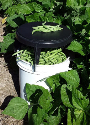 Green beans pictured in a bucket with The Original Bucket Stool™ on top of bucket in a garden.