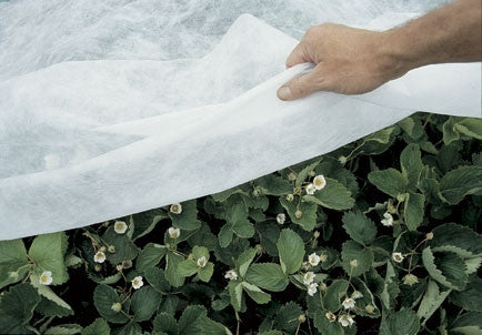 frost cloth for nursery plants
