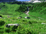 green alpine mountain meadow