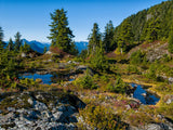 summer backgrounds alpine pools trees bushes