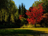 fall autumn landscape with red and green trees