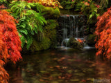 autumn backgrounds paradise creek red leaves waterfall