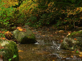 autumns arrival stream rocks and golden leaves