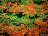 red green yellow fall colors blended together