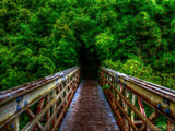 bridge to a forest of bamboo