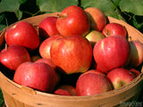 red bushel of apples in basket