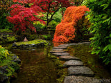 fall backgrounds cascading orange fire leaves rock pathway in pond