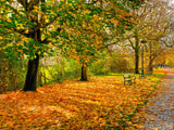 changing color of autumn leaves below trees background