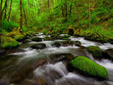 forest creek background with rocks and moss