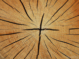 cracked tree rings form cross