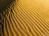 ripples in golden desert sands