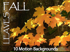 Fall Leaves Motion Backgrounds Collection
