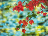 fall symphony of leave branch on blurred background