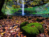 fall maple leaves on ground with waterfall and green moss