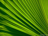 palm sunday fan background