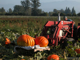 farmer harvesting pumpkins field tractor